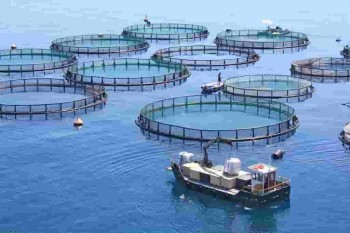 Cage System of Fish Farming_1.jpg